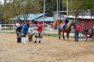 Прогулки на лошадях в Токсовском лесу